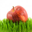 Apple on grass — Stock Photo