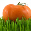 Tomato on grass — Stock Photo