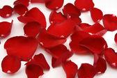 Petali rossi brillante — Foto Stock