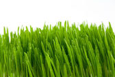 The grass — Stock Photo