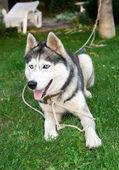 Hond — Stockfoto