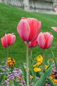 λουλούδι — Φωτογραφία Αρχείου