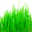 Royalty-Free Stock Photo: Grass