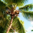 Palm — Stock Photo #2075767