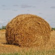 Stock Photo: Autumn field and straw bale