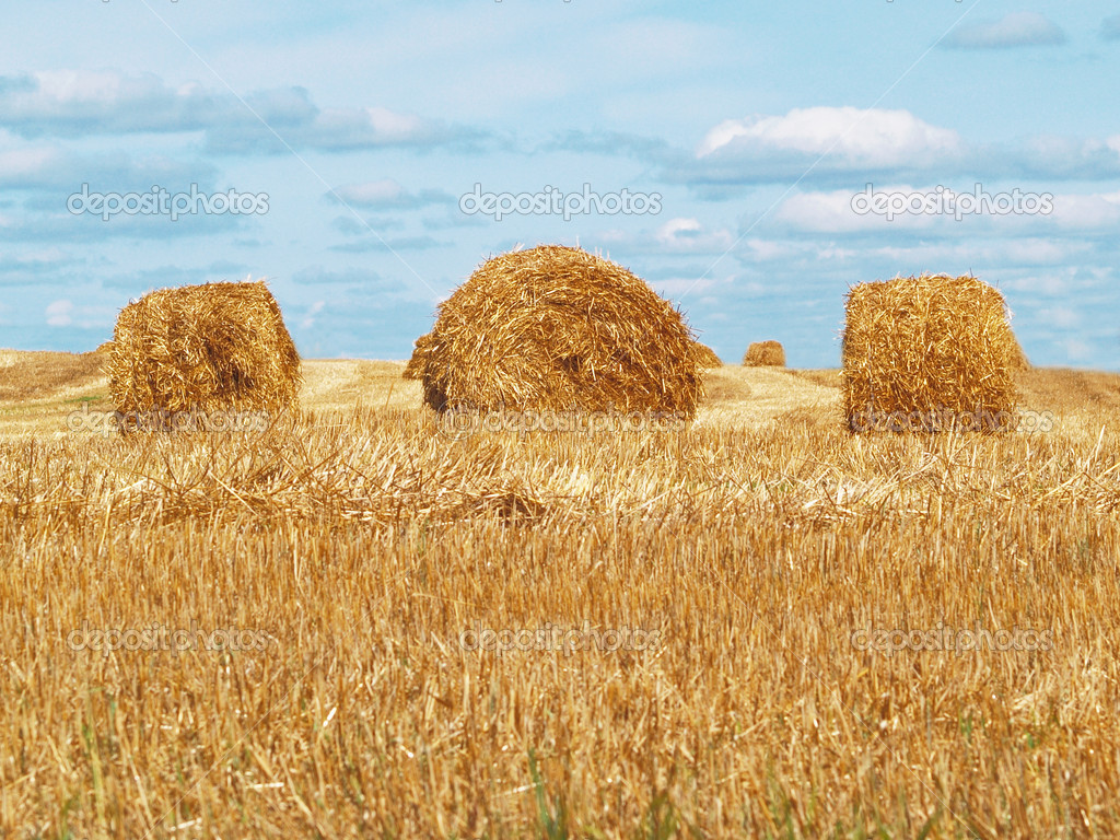 Autumn field with the cleaned crop and a bale of yellow straw close up     — Stock Photo #2532470