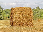 Autumn field and straw bale — Stok fotoğraf
