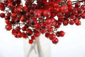 Red fruits in white background — Stock Photo