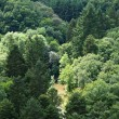 Forest from above — Stock Photo