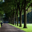 Jogger in park — Stock Photo #2103324
