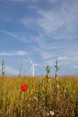Flower and windenergy — Stock Photo