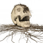 Human skull — Stock Photo #2071460