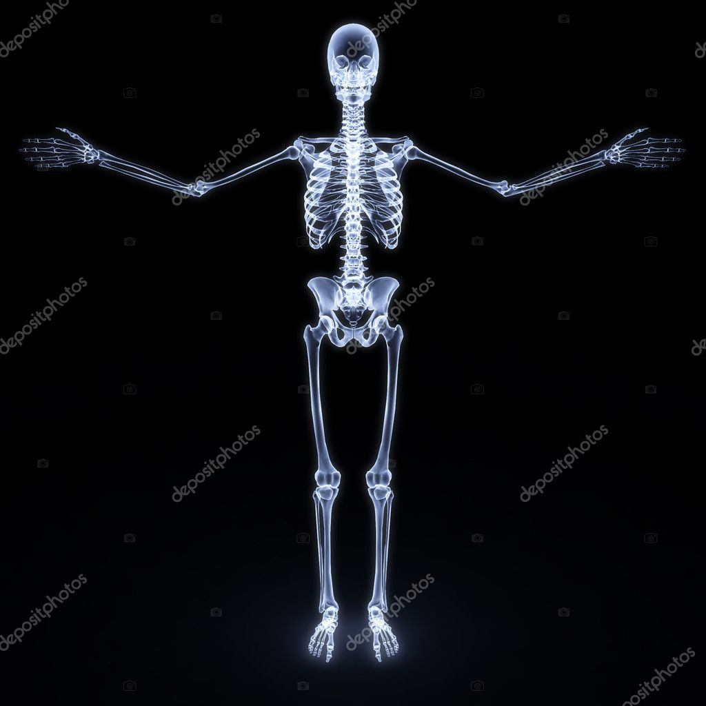 Human skeleton x-ray. isolated on white — Stock Photo #2071375