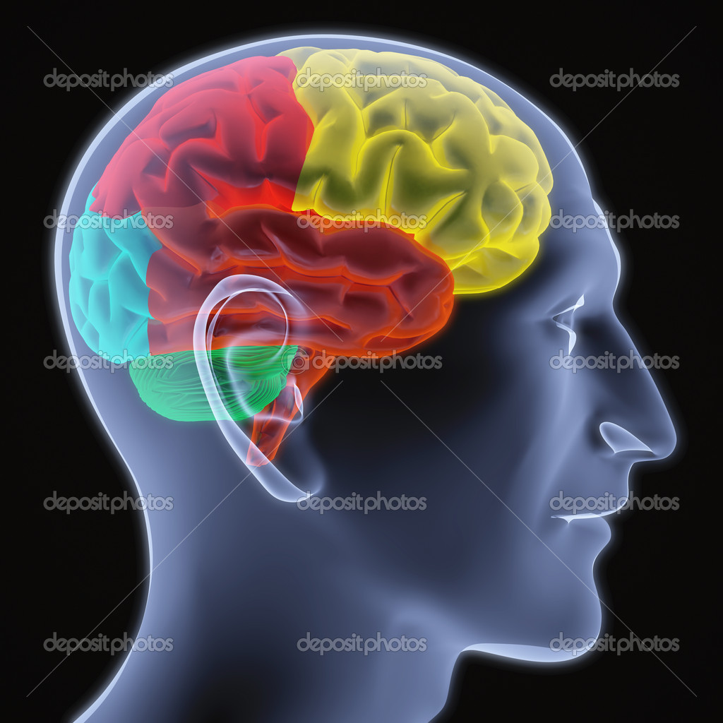 Scanning of a human brain by X-rays. part of the brain highlighted in different colors. — Stock Photo #2073266