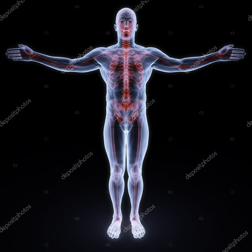 Human x-ray with red sceleton — Stock Photo #2073516
