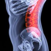 Spine — Stock Photo