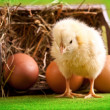Easter Eggs and Chick — Stock Photo