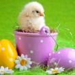 Stock Photo: Easter Chick and Egg