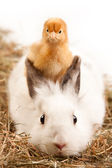 Rabbit and Chick — Stock Photo