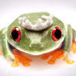 Royalty-Free Stock Photo: Crazy Frog!