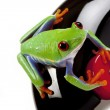 Green Frog on toy — Stock Photo #2062230
