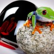 Green frog — Stock Photo #2062460