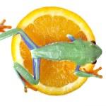 Frog walking — Stock Photo #2062508