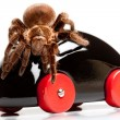Tarantula on Toy! - Stock Photo