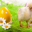 Royalty-Free Stock Photo: Easter Chick and Eggs