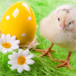 Easter Chick, eggs and Bucket — Stock Photo