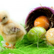 Stock Photo: Easter Chick, eggs and Bucket