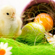 Easter Chick, eggs and Bucket — Stockfoto