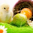 Easter Chick, eggs and Bucket — Stock Photo #2063529