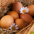 Eggs in Basket — Stockfoto