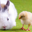 Bunny and Chick — Stock Photo