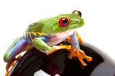 Green Frog on toy — Stock Photo