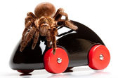 Tarantula on Toy! — Stock Photo