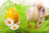 Easter Chick and Eggs — Stock Photo