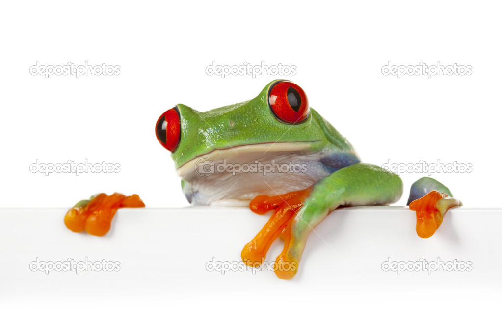 Green crazy frog on board edge  Stock Photo #2062417