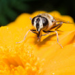 Stock Photo: Bee sting