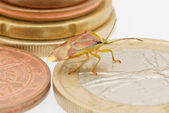 Bug and euro coins — Stock Photo