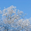 Foto Stock: Branches in snow