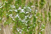Moss-grown — Stock Photo