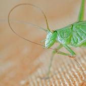 Grasshopper green — Stock Photo