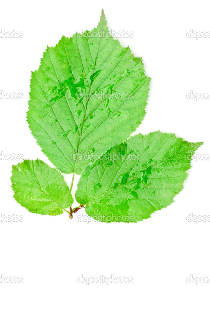 The branch of walnut leaves — Stock Photo #2211785