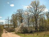 Spring-time landscape — Stock Photo