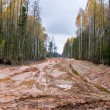 Stock Photo: Dirty road in Latvia
