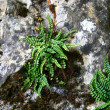 The plants of the stone wall — Stock Photo