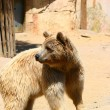 White bear in Zoo, Tabernas, Almeria — Stock Photo
