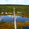 Big bog Estonia — Stock Photo